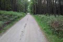 Leśnictwo Koczury (2)